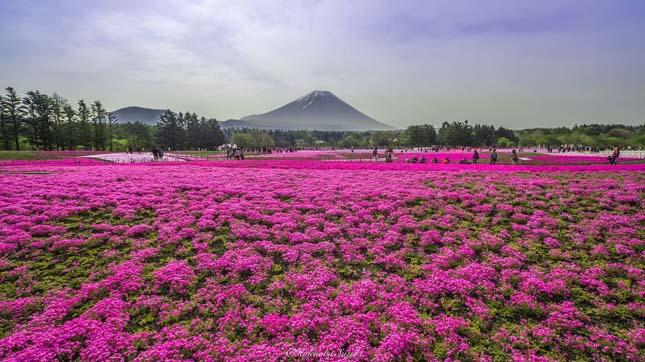 Japán virágpark