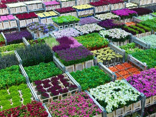 Virágtőzsde