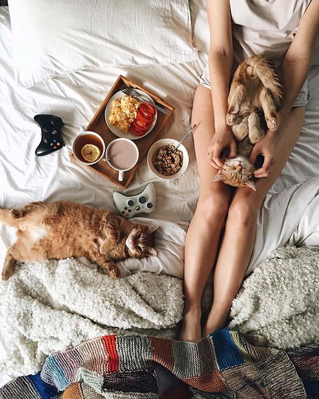 Megmentett cicák