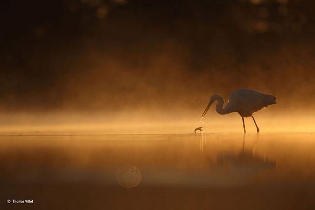 Wildlife Photographer 2015