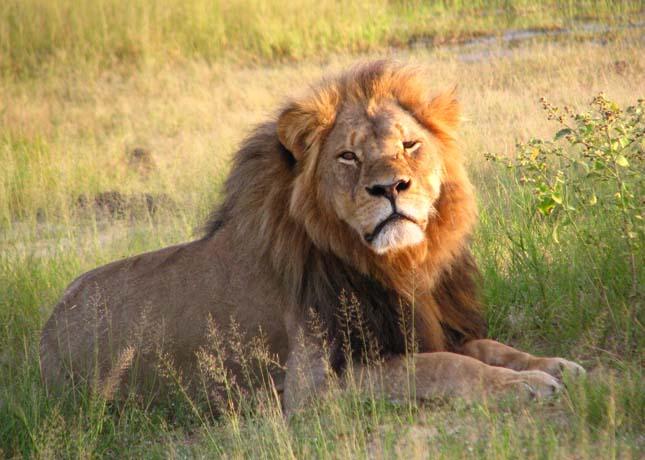 Zimbabwe a vadállatait árulja