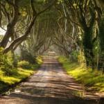 A Sötét erdő Észak-Írországban