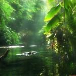 A csodálatos Amazonas