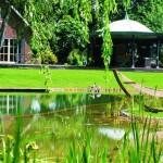 A kerti medencék új generációja: a természetes medencék