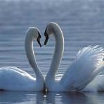 A világ legszebb madarai