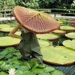 Világrekorder növények
