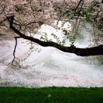 A titokzatos Ázsia – Michael Yamashita fényképei