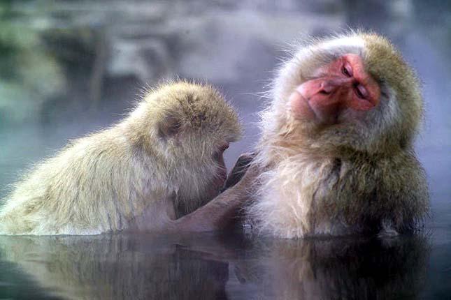 japan-makakok