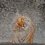 National Geographic fotópályázatának nyertesei