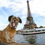 Oscar a világutazó kutyus