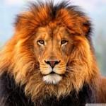 Zambia betiltja a nagymacskák vadászatát