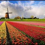 Keukenhof – a világ legnagyobb és legszebb virágoskertje