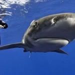 Elképesztő fényképek cápákról