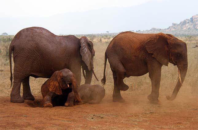 elefantok-2