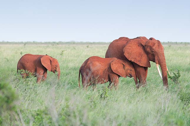 elefantok-3