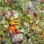 A megtermelt élelmiszer felét kidobjuk