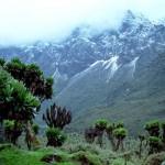 Rwenzori-hegység – Afrika leglátványosabb hegylánca