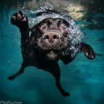 Seth Casteel víz alatti kutyás fotói