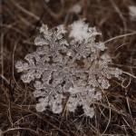 Andrej Osokin makrofotói apró hópelyhekról
