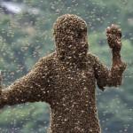 Kínai méhészverseny
