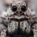 Elképesztő fotók apró rovarokról #1 – A mikrokozmosz világa