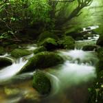 Jakusima – gyönyörű erdő a japán szigeten