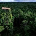 A fák koronáján élő Korowai törzs Pápua Új-Guineában