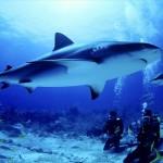 Minden tizenötödik cápát lemészárolják