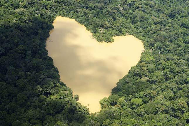 Amazonas dzsungel