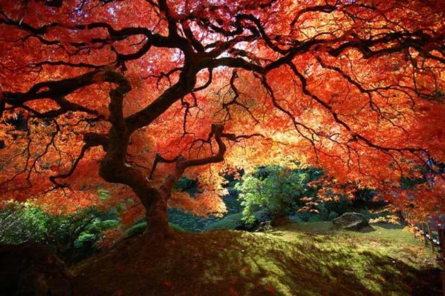 Japán kert Portlandban.