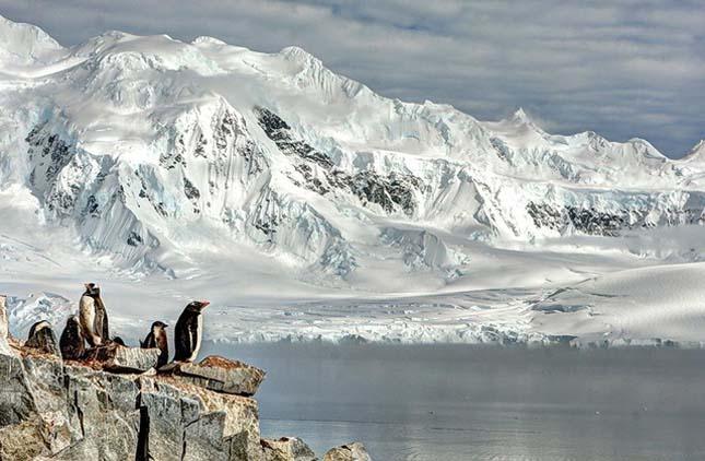 Szamárpingvinek