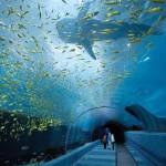 Georgia Aquarium – a világ egyik legnagyobb akváriuma
