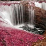Cano Cristales – színpompás kolumbiai folyó
