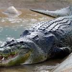 A világ legnagyobb krokodilja