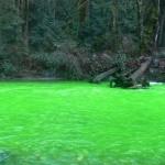 Neonzöldre változott a Goldstream folyó vize