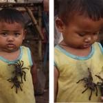 Kambodzsában gasztronómiai csemege a tarantella pók