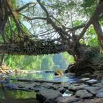 Több száz éves természetes hidak az indiai Khasi-hegyekben