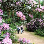 A Jeli Arborétum színpompás hangarózsái