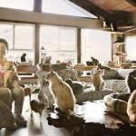 Macskamenhely lett egy amerikai nő házából – jelenleg 700 macska osztozik rajta
