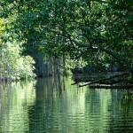 A Kongó-medence esőerdeje