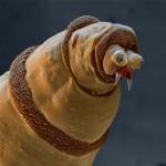 Az élő szervezetek mikroszkóp alatt