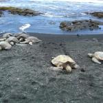 Black Sand Beach – Hawaii fekete homokos tengerpartja