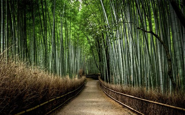 Bambusz erdők – Kyoto, Japán