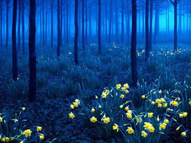 Fekete erdő Németország