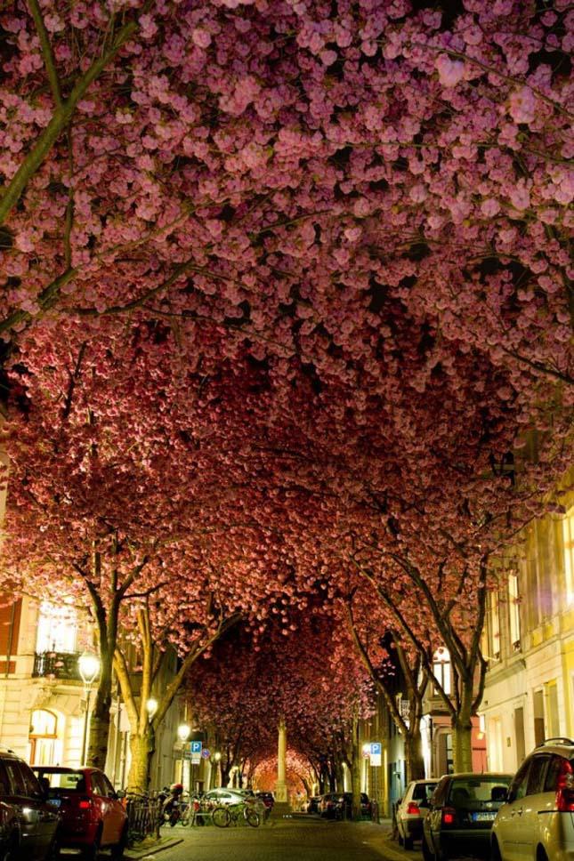Utca Bonnban Németországban