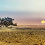 10 híres fa a világ minden részéről