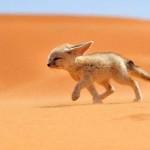 A legszebb természetfotók a National Geographic 2013 pályázatáról