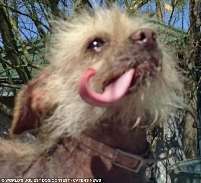 A világ legcsúnyább kutyája