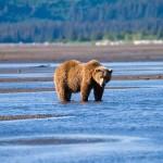 A 10 legjobb úticél medveszafarihoz