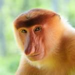 3 veszélyeztetett faj a világ legritkább állatai közül